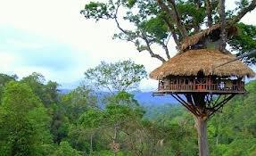 tree_house_pic.jpg