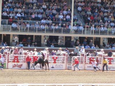 Rodeo: Bull Riding