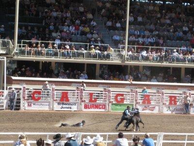 Rodeo: Wild Pony Racing