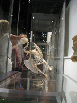 Ethereal Dino Bird