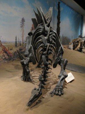 My Favourite Stegosaurus