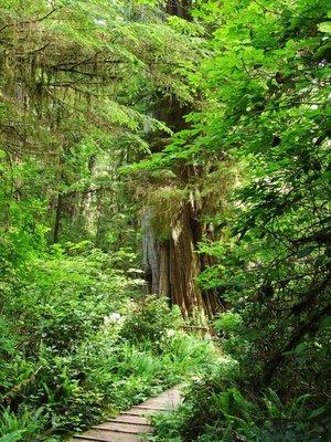 Rainforest near Long Beach
