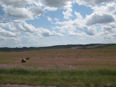 Prettiest Hay bales at the east end of Montana