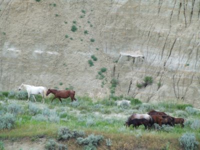 I am Watching Wild Horses Out My Window