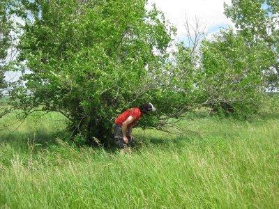 Geocaching in Tall Prairie Grasses