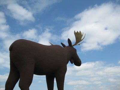 Mac the Moose with head in the clouds