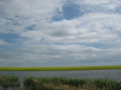 Saskatchewan River Flood Byproduct
