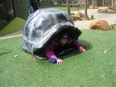 64_zoo_turtle