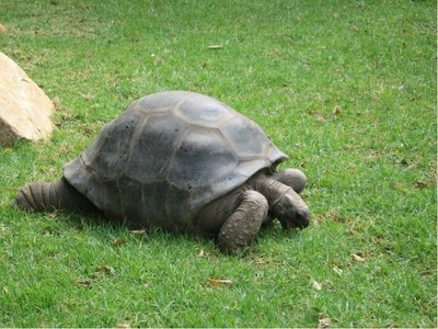 64_zoo_turtle2