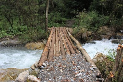 Log Bridge on the Baihe Golden Monkey Natural Reserve