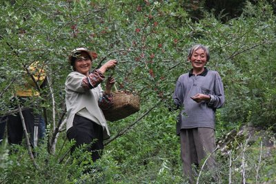 Sichuan Pepper Farmers
