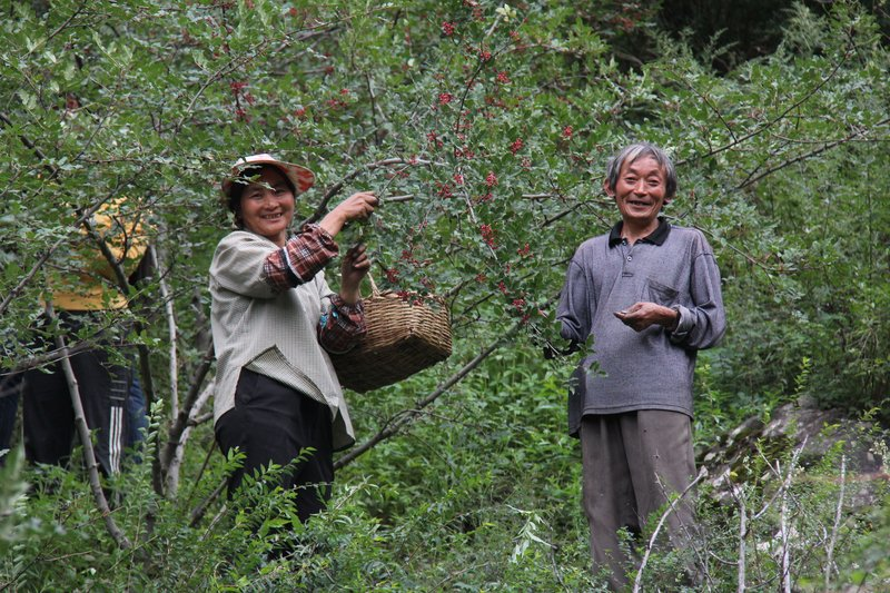 Sichuan Pepper Farmers