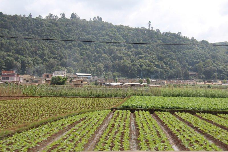Vegetable fields near Kaiyuan