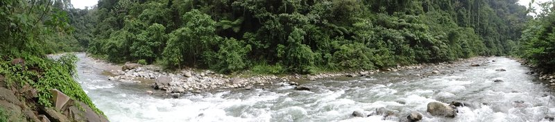 bukit lawang back to nature guesthouse indonesia sumatra