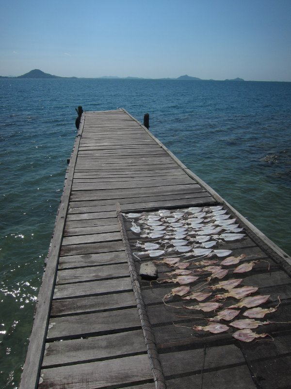 Squid Drying on the Dock