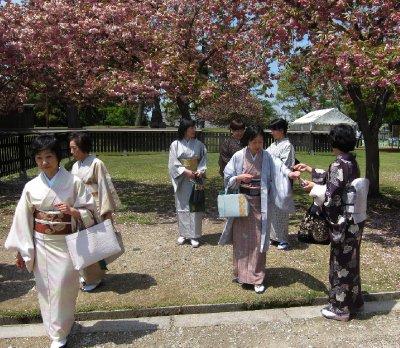 Kimonos and Cherry Blossoms