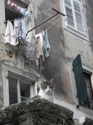 Cat in Kotor on Laundry day