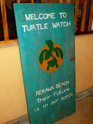 Turtle Watching on Rekawa Beach