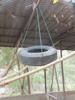 Safari Volunteer - Chelsea's tire swing