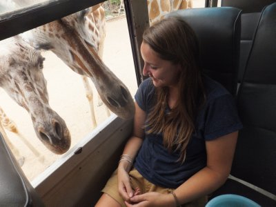 giraffe - Safari Volunteer