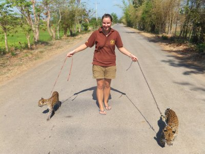 Walking the Leopard Cubs