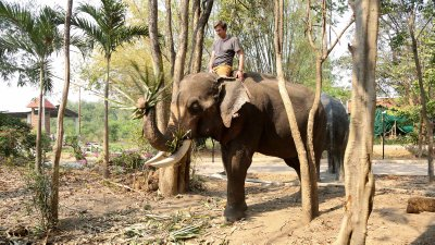 Safari Volunteer- Elephant trekking bareback