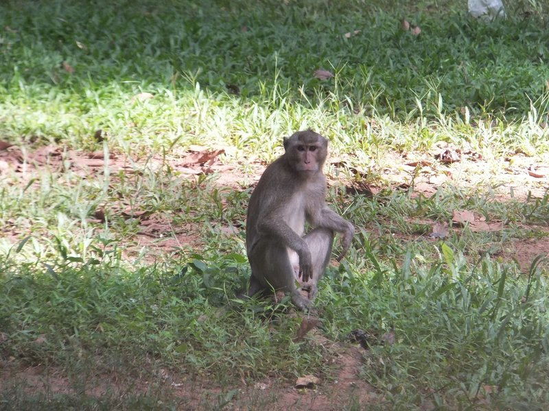 Monkeys in Angkor Thom