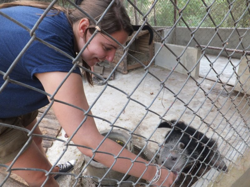Safari Volunteer - Chelsea feeding IWendy the Binterong