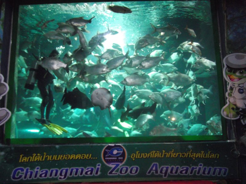 Fish Feeding show Chiang Mai Zoo