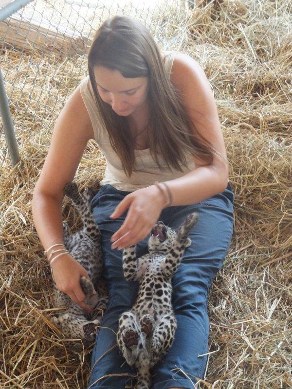 Safari Volunteer- leopard cubs at 7 weeks old