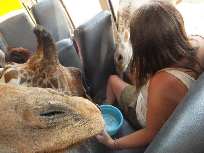 Sarafi Volunteer- safari bus