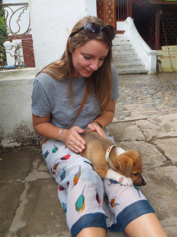 Temple dog in Luang Prabang