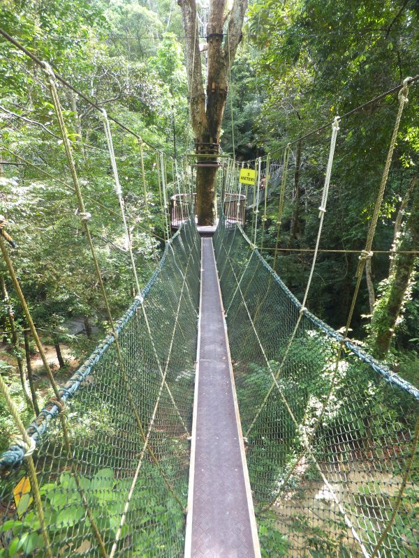 Canopy walk in Penang national park