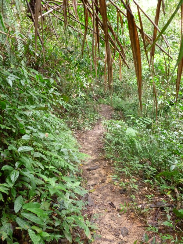 Our Jungle Trail