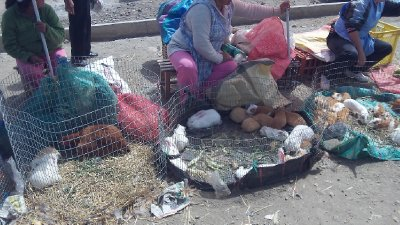 Animal_Market.jpg