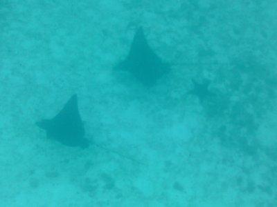 Rayz_n_Star_Fish.jpg