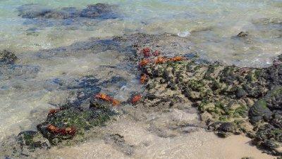 Sally_Lightfoot_Crabs.jpg