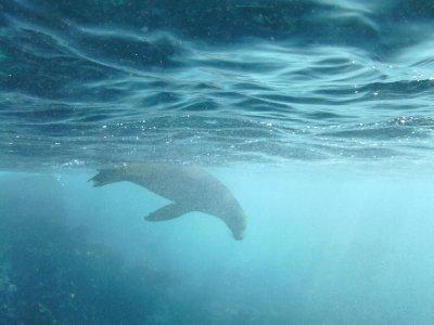 Sea_Lion_4.jpg