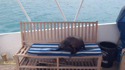 Sea_Lion_on_the_boat.jpg