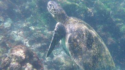 Turtle_3.jpg