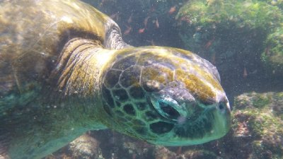 Turtle_Head.jpg
