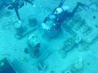Eel_and_divers.jpg
