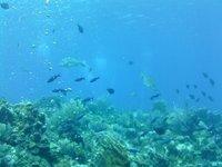 Fish_3.jpg