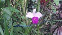 Orchid_3.jpg