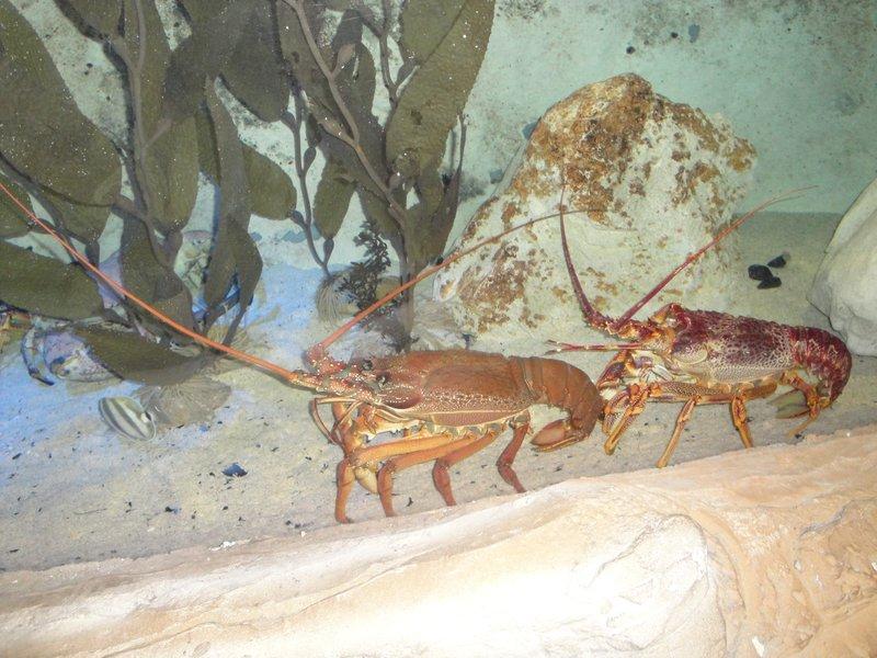 Lobster?