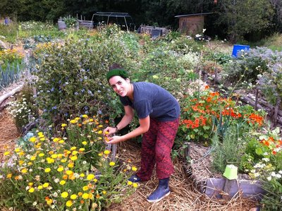 Picking some soucis flowers