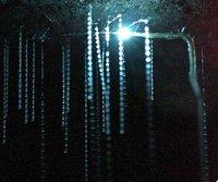 Glowwormca..humb_edited.jpg