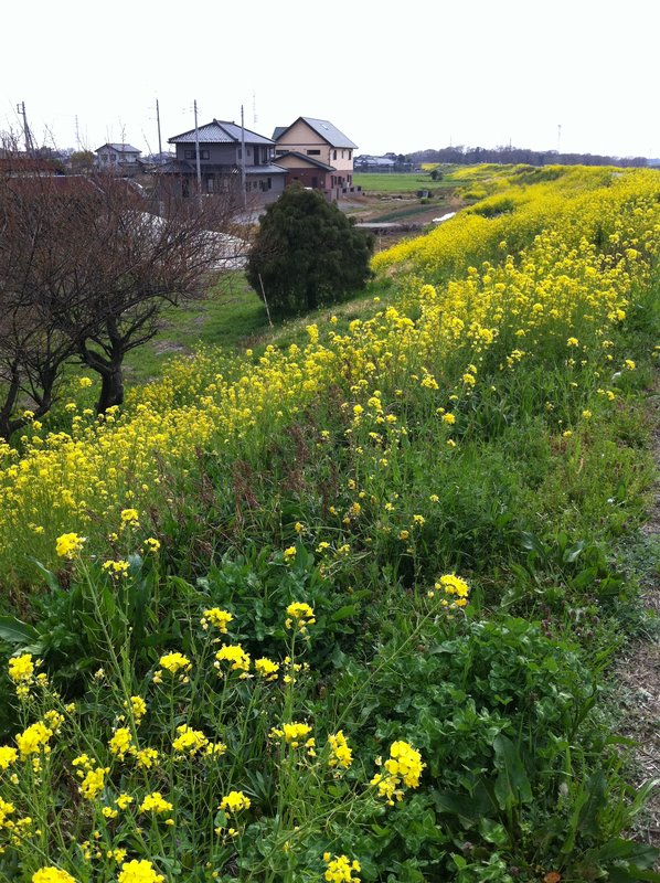 large_Ibaraki_Sh..ra_2011_820.jpg