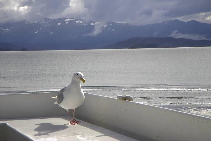 Demure Little Gull