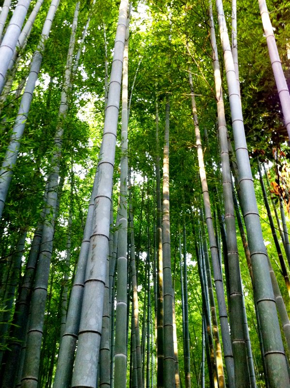 large_July_2012_.._Bamboo_052.jpg
